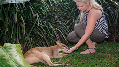 Rainforestation Nature Park, Kuranda Village & Skyrail Cableway Tour