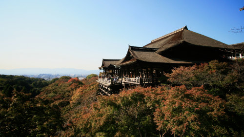Scholar-Led Shintoism & Buddhism Walking Tour