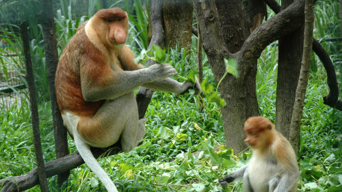 Private Lok Kawi Wildlife Park Adventure by Borneo Trails Travel