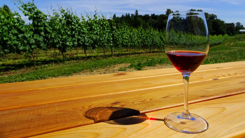 Fraser Valley Private Winetasting Tour with Gourmet Lunch