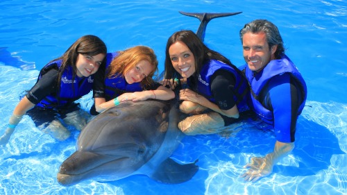 Small-Group Dolphin Ride & Interaction