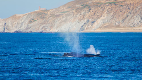 Whale-Watching Tour with Breakfast aboard Cabo Legend