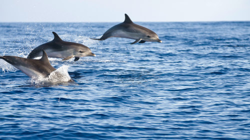 Bird-, Dolphin- & Whale-Watching Tour