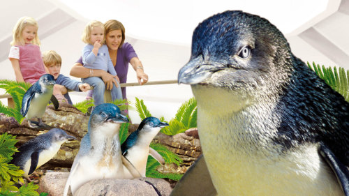 Manly SEA LIFE Sanctuary Admission