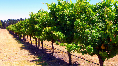 Margaret River Wineries Day Tour by Gray Line