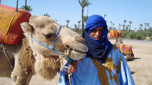Camel Ride in Palm Grove