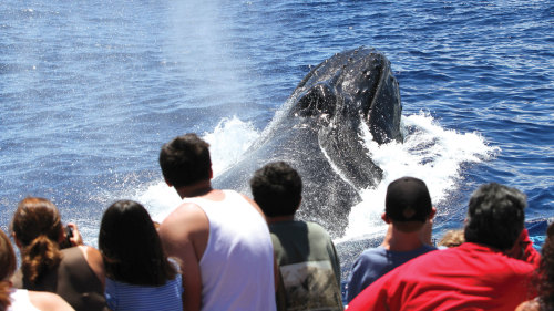 Maalaea Whale-Watching Tour