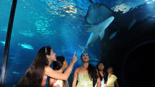 Discover & Dine at Maui Ocean Center Aquarium