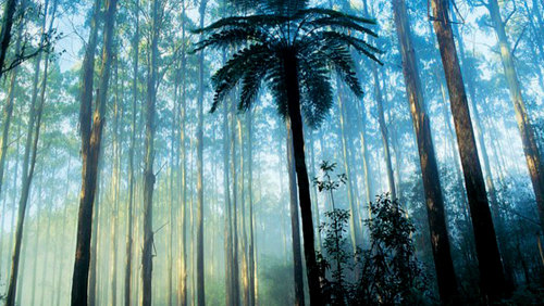 Dandenong Ranges Full-Day Tour by Leadbeater Eco Tours