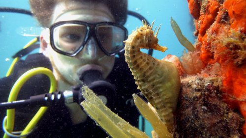 Scuba Diving with Sea Dragons