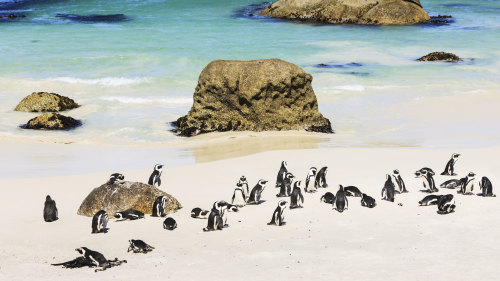 Twelve Apostles & Penguin Direct Full-Day Tour