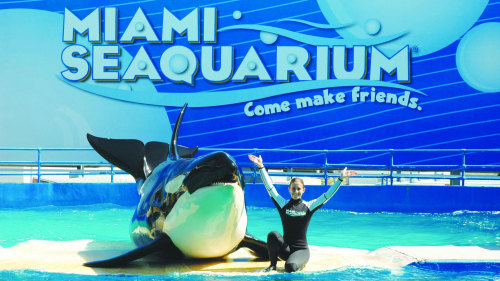 Miami for Children: Seaquarium with Transportation