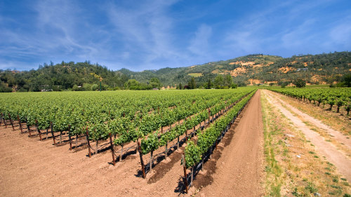 Guided Napa Valley Wine Tour