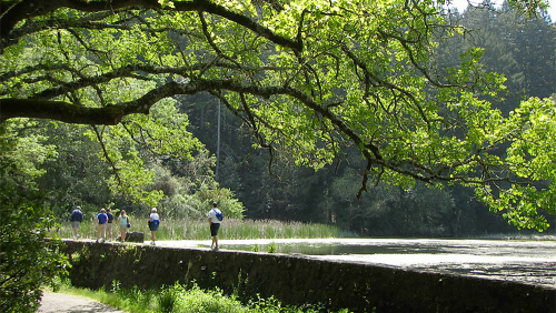 Guided Hike in Sonoma County with Picnic Lunch by Getaway Adventures