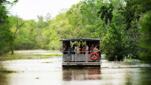 Gray Line New Orleans: Swamp & Bayou Tour