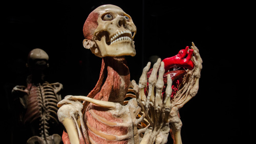 BODY WORLDS: Pulse Exhibition