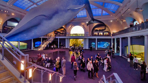 Museum Hack: Guided Tour of the American Museum of Natural History