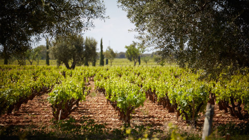 Côtes de Provence Private Wine Tour & Tasting with a Wine Expert