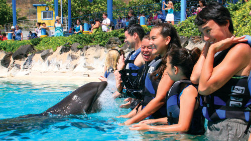 Sea Life Park Shallow Water Dolphin Encounter