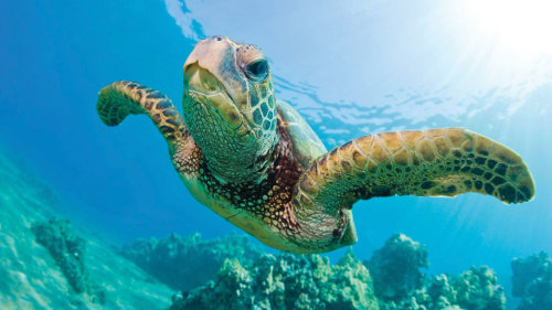 Snorkeling & Sailing with Turtle Sightings Guaranteed