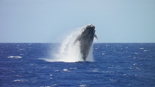 Premium Whale Watch Cruise