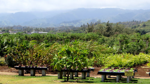 Tropical Treats, Gourmet Coffee & Hawaiian Chocolate Tour