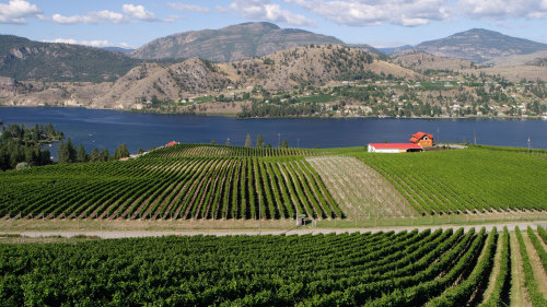 Okanagan Falls Wine Tour from Penticton
