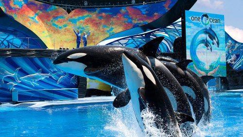 SeaWorld® Orlando Tickets