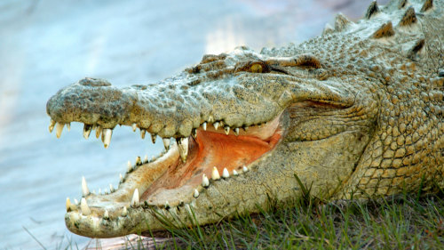 Gatorland & Airboat Ride by Florida Dolphin Tours