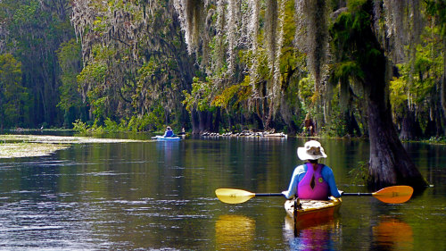Wekiva River Paddle with Lunch