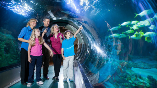 SEA LIFE Orlando with Multi-Attraction Pass