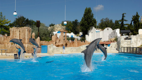 dolphin show 5