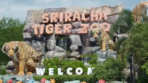 Sriracha Tiger Zoo Half-Day Tour by Tour East Thailand