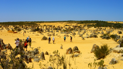 Pinnacles Desert Day Tour with 4-Wheel-Drive Adventure by Gray Line