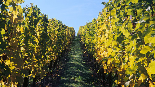 Swan Valley River Cruise & Vineyard Tour by Out & About Wine Tours