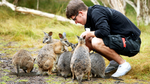 Phillip Island Ultimate Eco Tour by Bunyip Tours