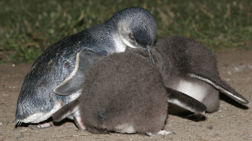 Phillip Island & Penguin Parade Tour by Mr John Tours