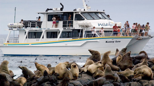 Phillip Island Seal-Watching Cruise by Wildlife Coast Cruises