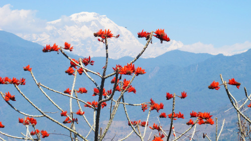 Small-Group Pokhara Hike Tour by Urban Adventures