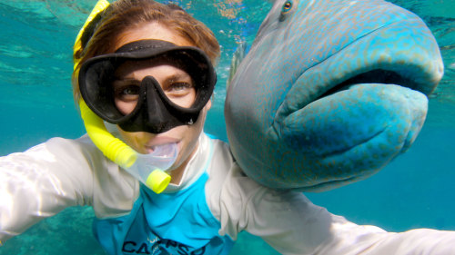 Great Barrier Reef Snorkeling Cruise by Calypso Reef Charters