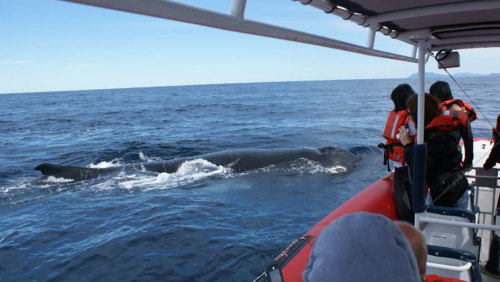 Whale Watching Cruise by Port Macquarie Cruise Adventures
