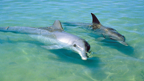 Port Stephens Dolphin Watching & Sandboarding Tour by AAT Kings
