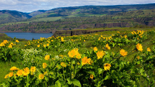 Full-Day Wildflowers of Columbia Gorge Tour with Lunch