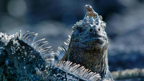 3-Day Galápagos Small-Group Tour