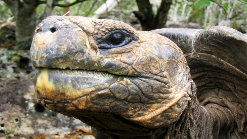 5-Day Galápagos Small-Group Tour