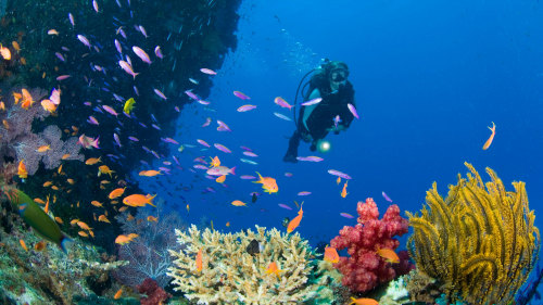 Underwater Safari Full-Day Tour with Optional Scuba Diving