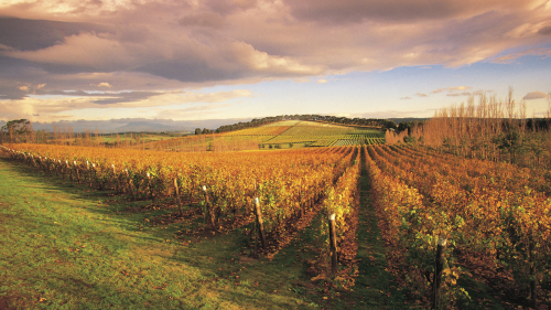 Richmond & Wine Half-Day Tour by Boutique Wine Tours Tasmania