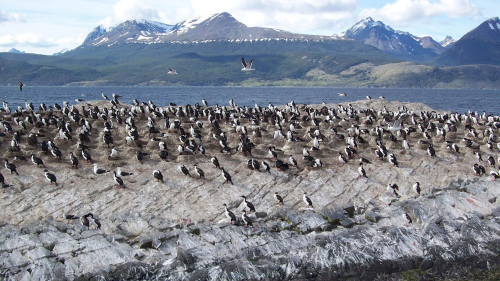 Beagle Channel Catamaran Ride to Penguin Island & Estancia Harberton