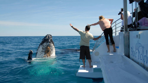 Whale-Watching Cruise by Blue Dolphin Marine Tours