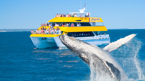 Whale-Watching Cruise by Spirit of Hervey Bay